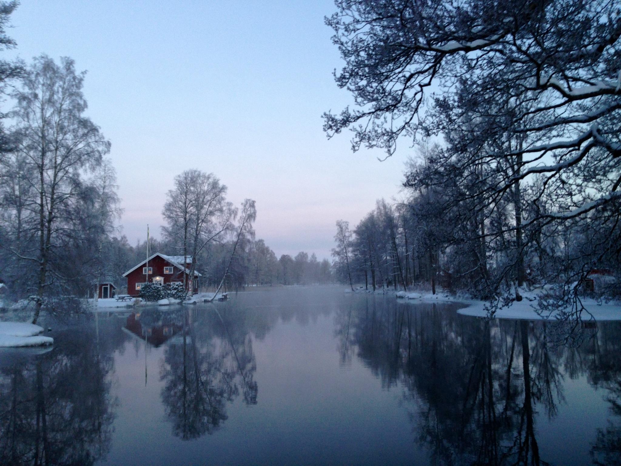 Sjövillan i vinterskrud 2012 (foto Jonas Belfrage)